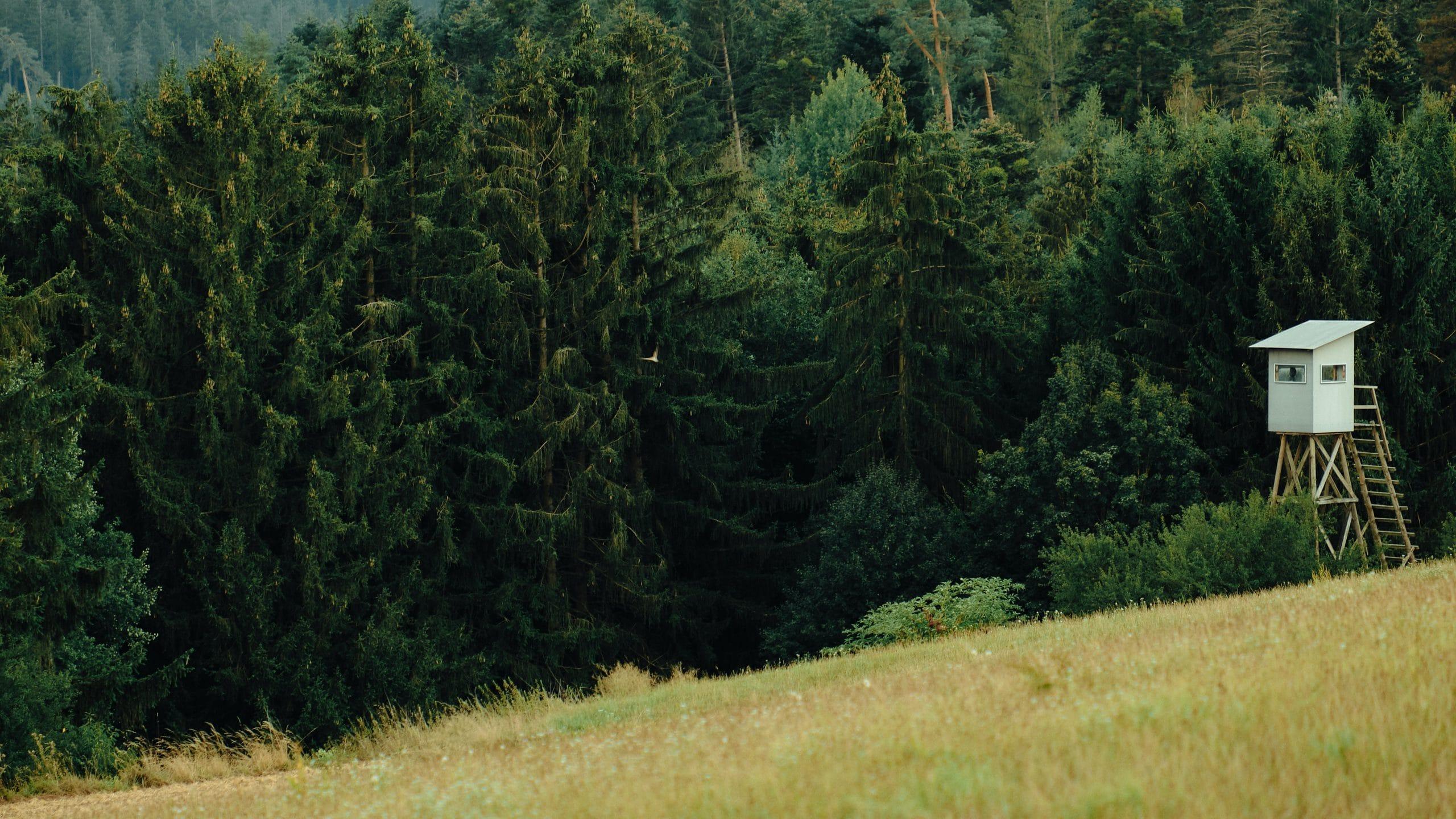 Waldrand mit Jagdunterstand